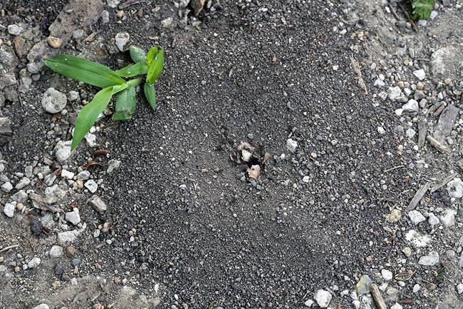 アリの巣.jpg