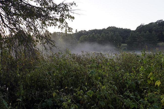 朝霧.jpg