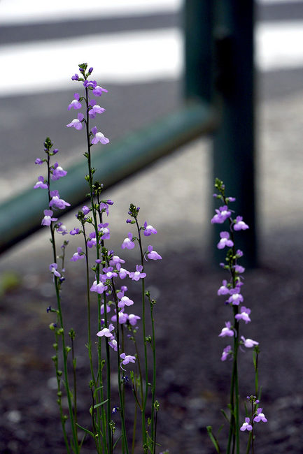根性花♪.jpg