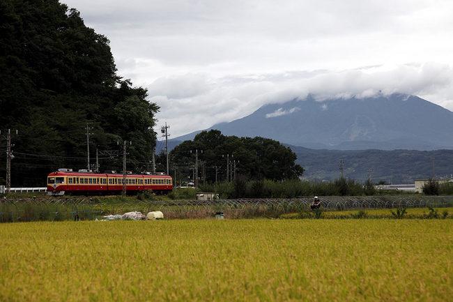 桜沢201109.jpg