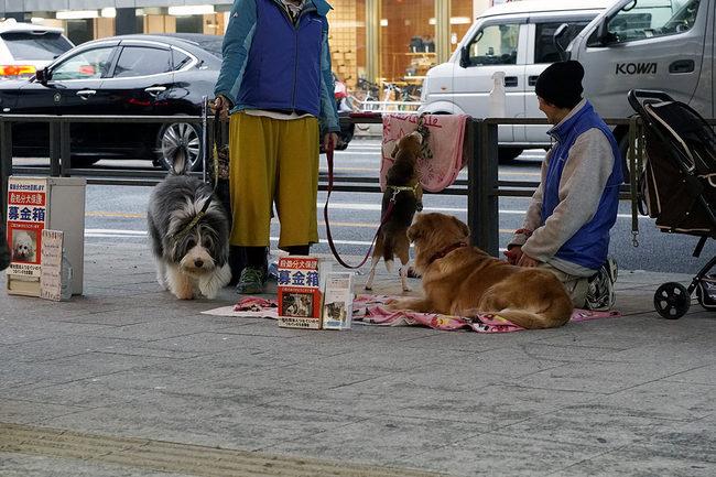 犬募金.jpg