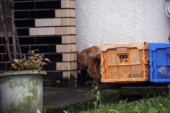 猫ケツw.jpg