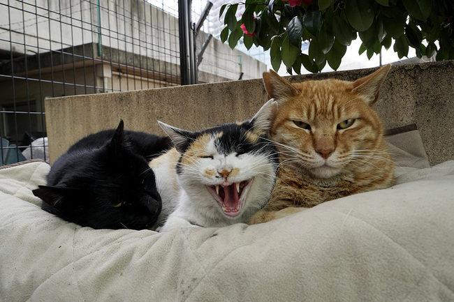 猫三並び♪.jpg