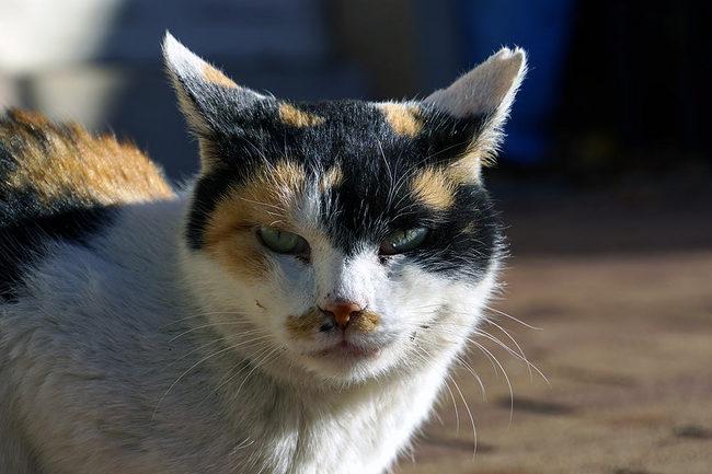 猫年♪.jpg