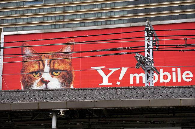猫相.jpg