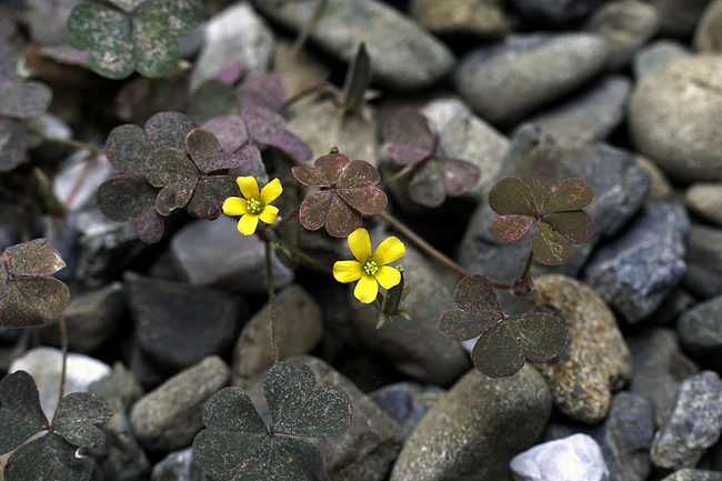 花♪.jpg