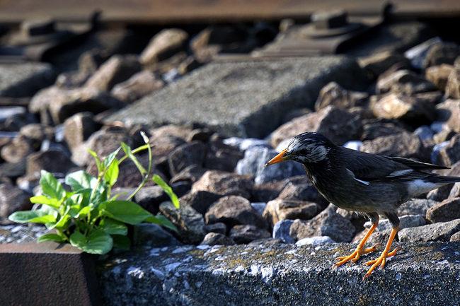鳥鉄.jpg